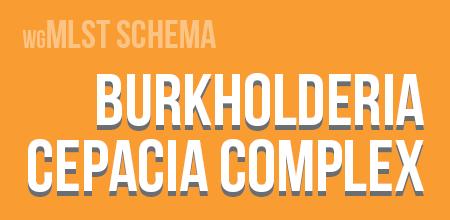 Burkholderia cepacia complex wgMLST schema