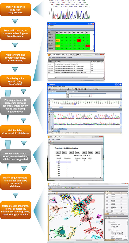 MLST analysis workflow