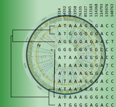 Whole-genome SNP analysis