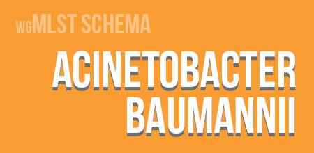 Acinetobacter baumannii wgMLST schema