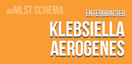 Klebsiella aerogenes wgMLST schema