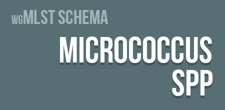 Micrococcus spp. wgMLST schema