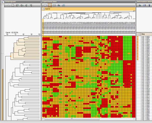 Transversal clustering of SNPs