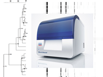 ISSR-PCR typing using QIAxcel